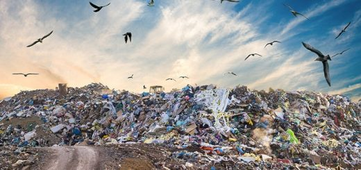 Bird control best practices for landfills